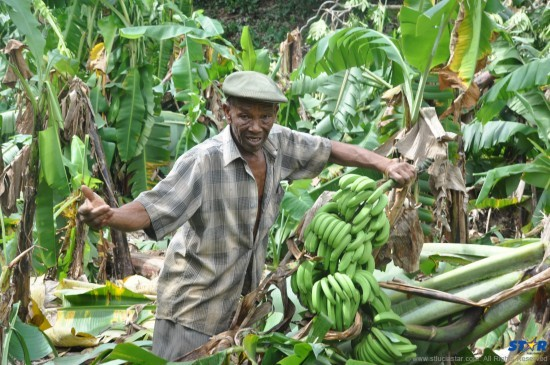 The Ministry of Agriculture is being called on by farmers to reduce the number of import licenses, and support local.