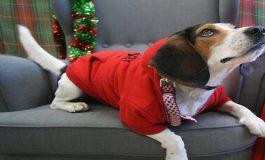 At Christmas Pets Need Love Too