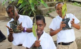 Babonneau Youth Synergy partners with WASCO, GEF to repair riverbanks