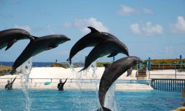 SLHTA Statement About Proposed Dolphin Park