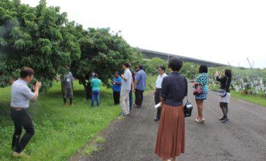 The Saint Lucia Taiwan Connection