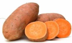 A New Investment Guide for the Caribbean Sweet Potato Sector