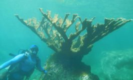 SANDALS FOUNDATION SUPPORTS INNOVATIVE CORAL RESTORATION PROJECT IN SAINT LUCIA