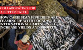 How Caribbean fisheries are teaming up with local and international partners to increase yields and profits