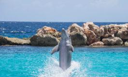 Dolphinarium/No Dolphinarium: Are we misplacing our priorities?